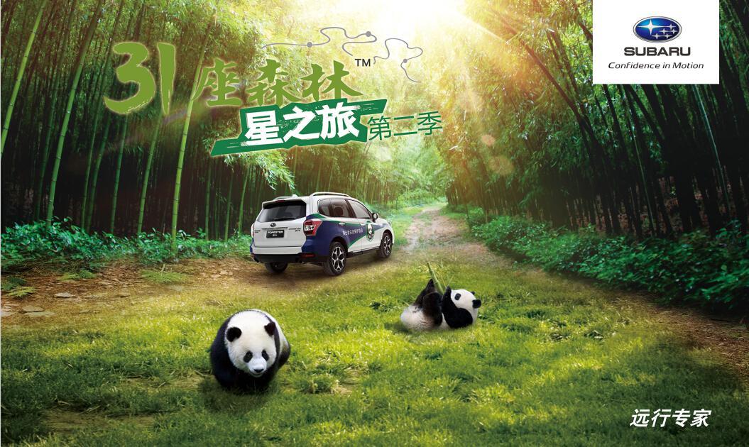 31森林星之旅第二季