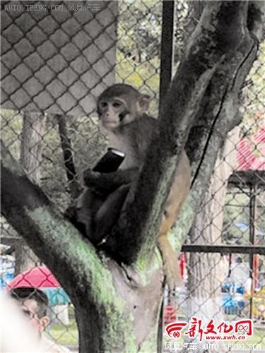手机被猕猴抢走