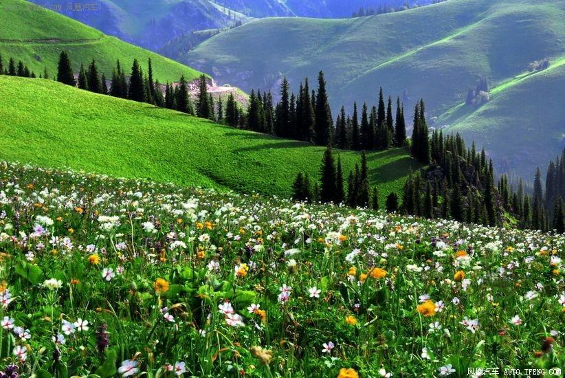 壁纸 草原 成片种植 风景 植物 种植基地 桌面 822_550